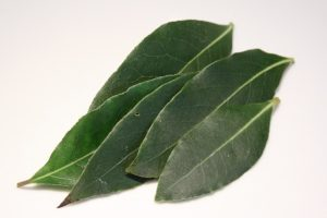 vavřín, bobkový list, Laurus nobilis