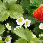rostliny v magii, magické rostliny, magický herbář