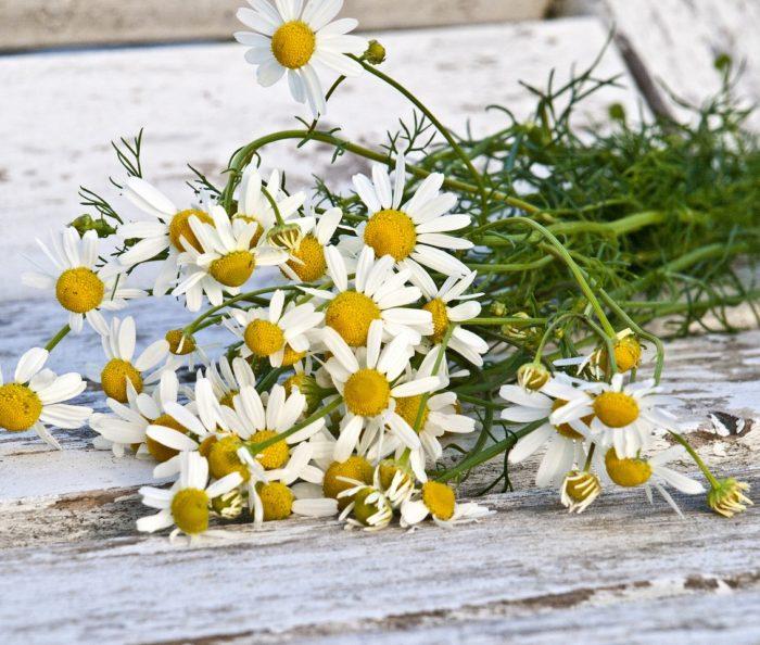 heřmánek, pravý, vonný, rmen, heřmánkovec přímořský, Matricaria chamomilla, rostliny v magii, magický herbář
