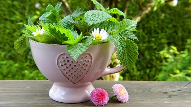 dávkování bylinných čajů