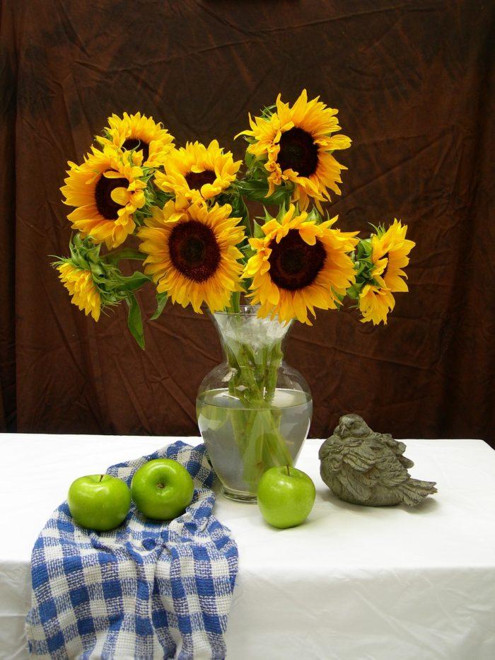 slunečnice, roční, pozdní, Helianthus, rostliny v magii, magický herbář