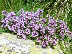 rostliny v magii, magický herbář