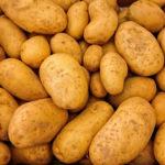 brambor obecný, solanum tuberosum, byliny abecedně A-B