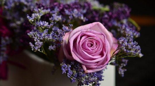 květ, léčivé byliny, růže