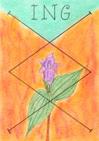 runa Inguz, Ing, divinace