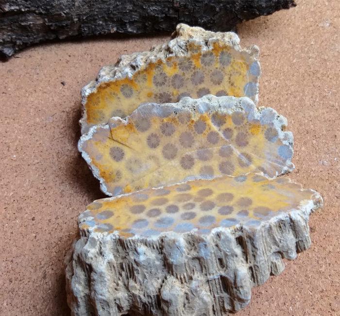 korál, coral, fossilized, agatized, fosilní, achát, agate, mineral, nerost, stone, kámen, raw, surový