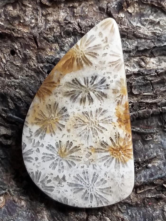 kámen, stone, nerost, mineral, achát, agate, korál, coral, fosilní, fossilized, kabošon, cabochon