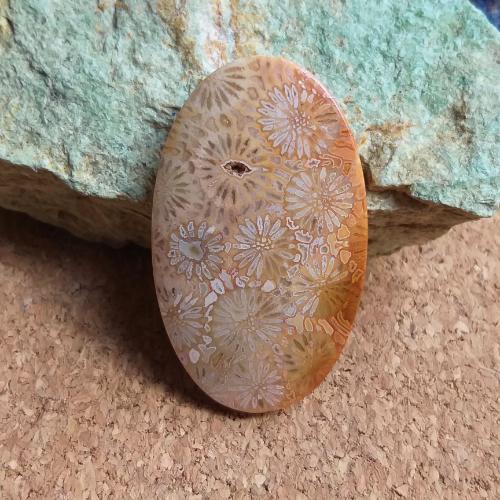 achát, korál, fossil coral, zkamenělý korál, agatized coral, achátový korál, zkamenělina, fosílie